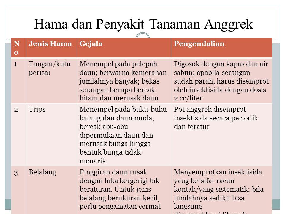 Hama dan Penyakit Tanaman Anggrek