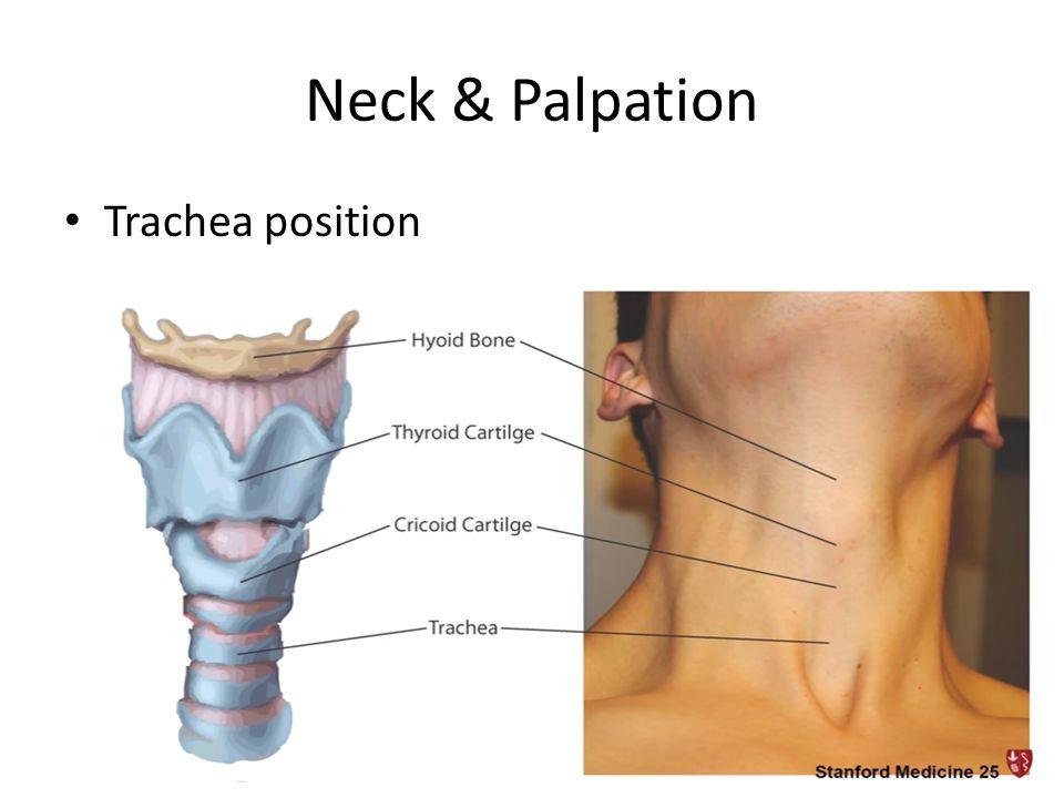 Neck & Palpation Trachea position