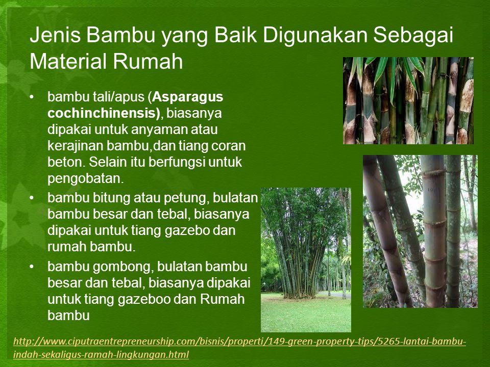 Jenis Bambu yang Baik Digunakan Sebagai Material Rumah