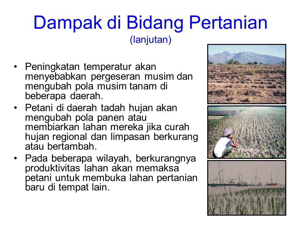 Dampak di Bidang Pertanian (lanjutan)