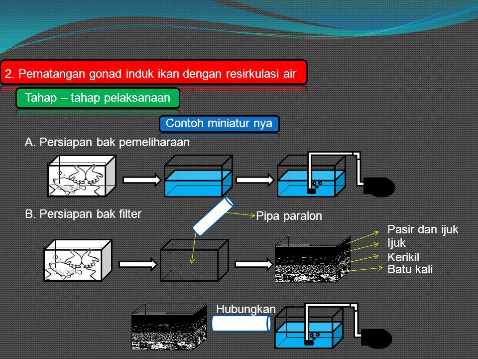 2. Pematangan gonad induk ikan dengan resirkulasi air