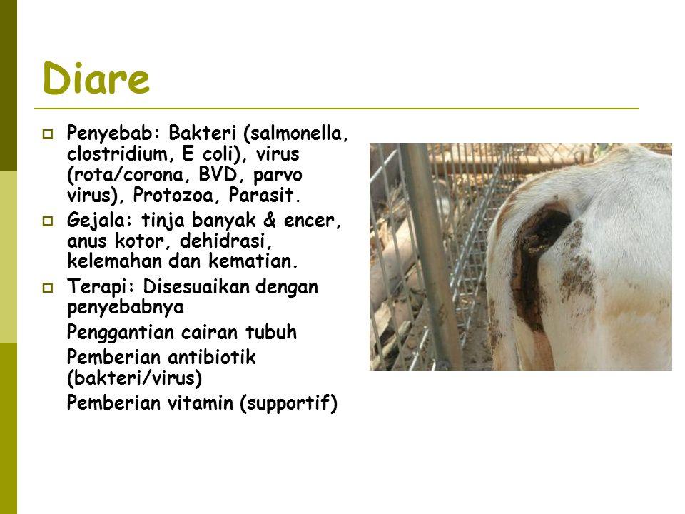 Diare Penyebab: Bakteri (salmonella, clostridium, E coli), virus (rota/corona, BVD, parvo virus), Protozoa, Parasit.