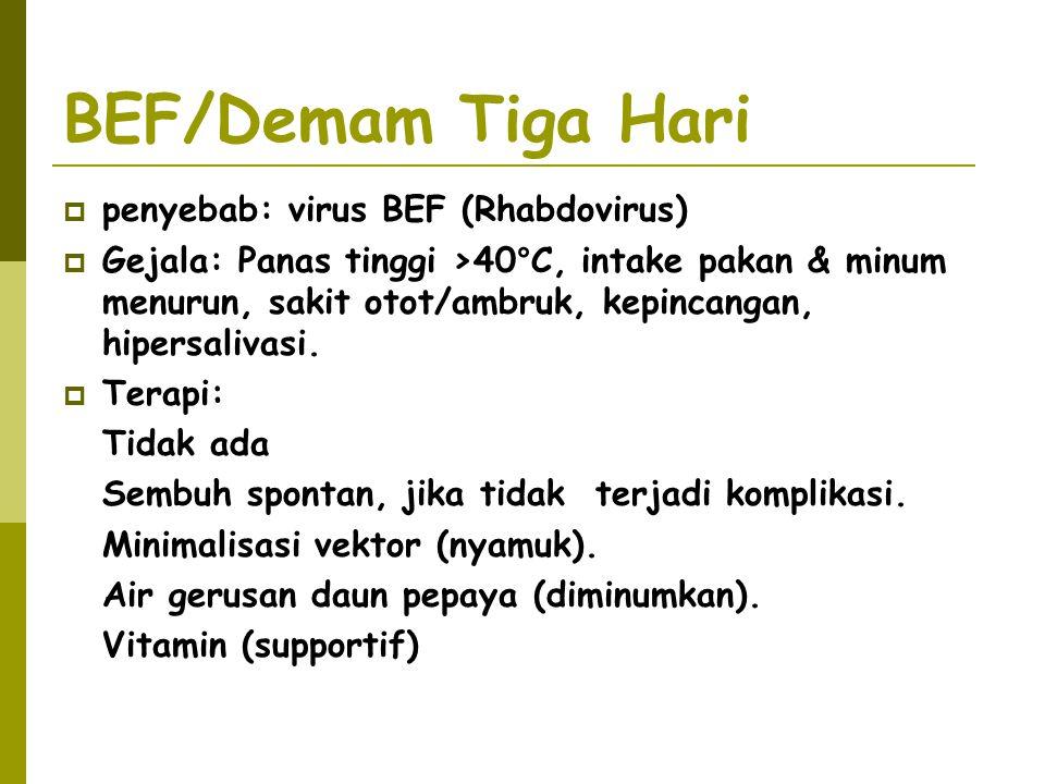 BEF/Demam Tiga Hari penyebab: virus BEF (Rhabdovirus)