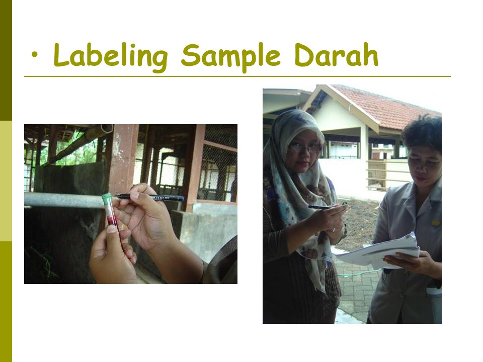 Labeling Sample Darah
