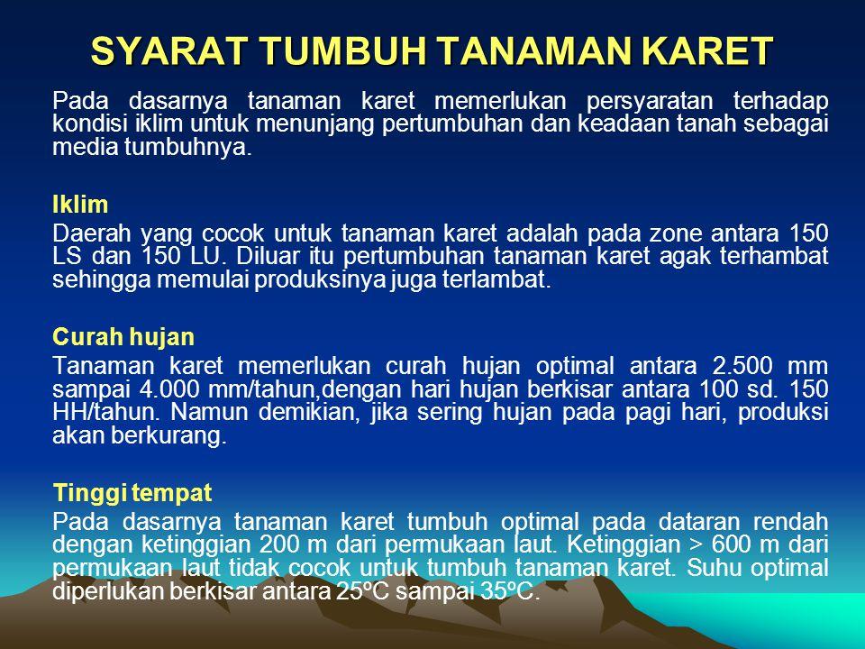 SYARAT TUMBUH TANAMAN KARET
