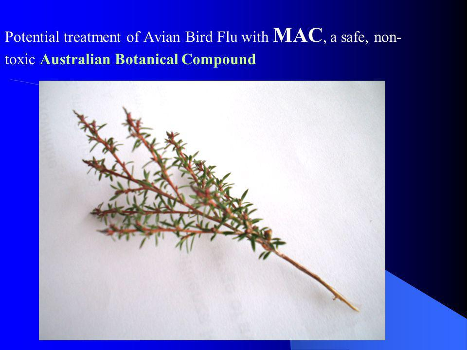 Potential treatment of Avian Bird Flu with MAC, a safe, non-toxic Australian Botanical Compound