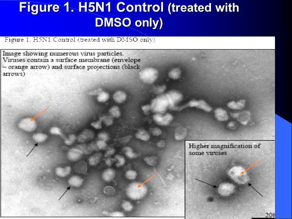 Figure 1. H5N1 Control (treated with DMSO only)