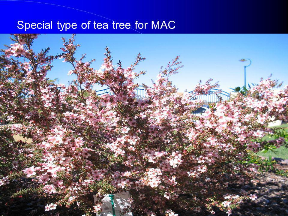 Special type of tea tree for MAC