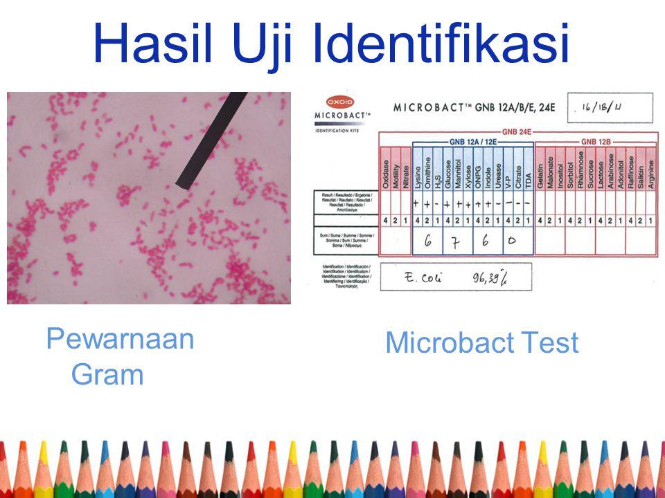Hasil Uji Identifikasi