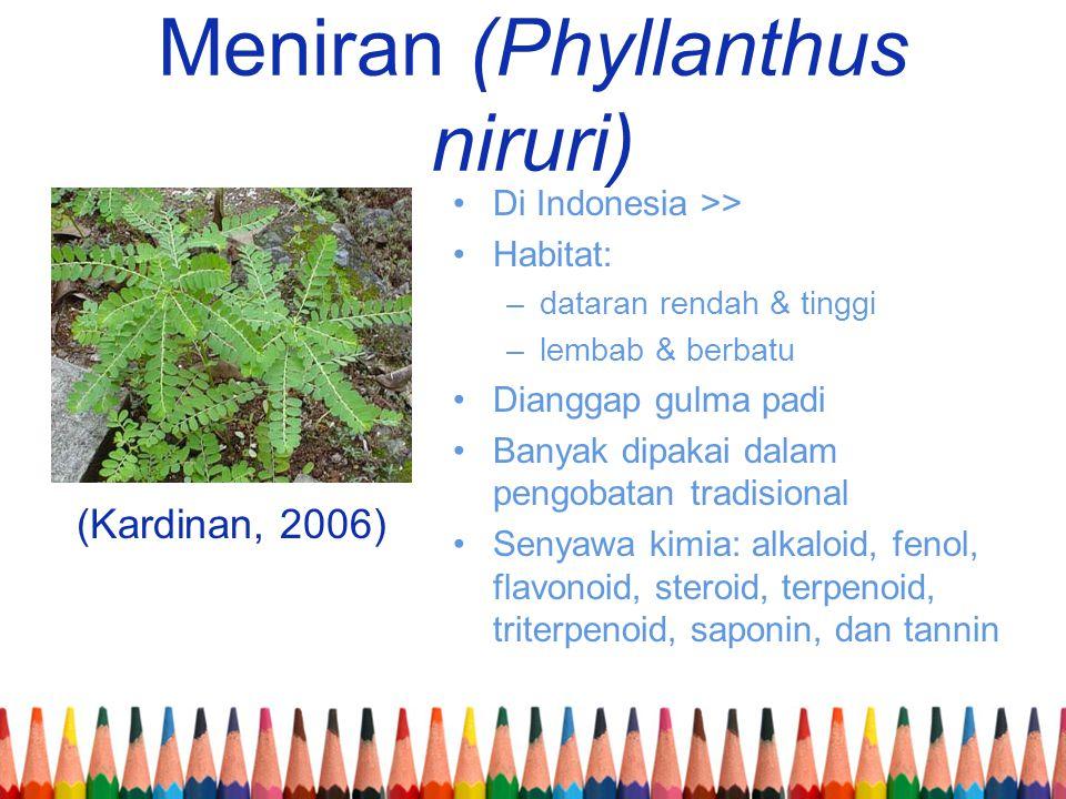 Meniran (Phyllanthus niruri)