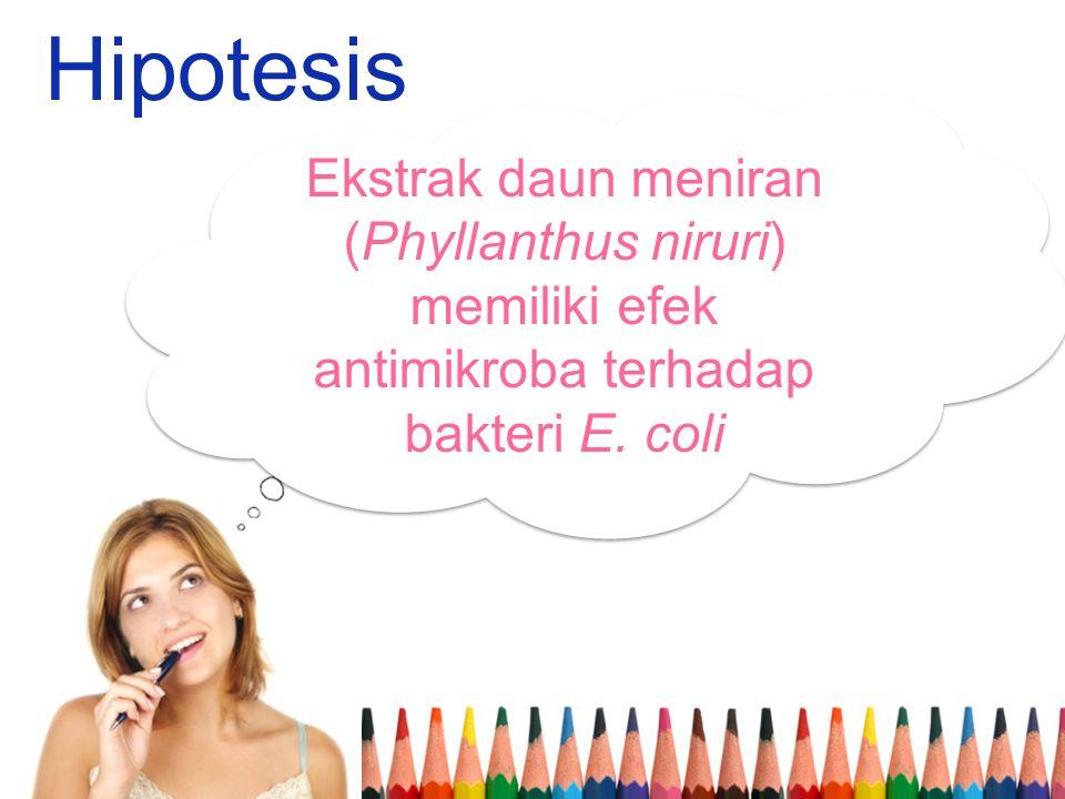 Hipotesis Ekstrak daun meniran (Phyllanthus niruri) memiliki efek antimikroba terhadap bakteri E.