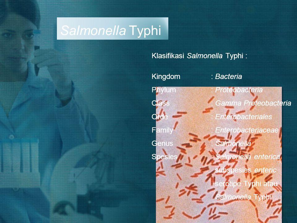 Salmonella Typhi Klasifikasi Salmonella Typhi : Kingdom : Bacteria