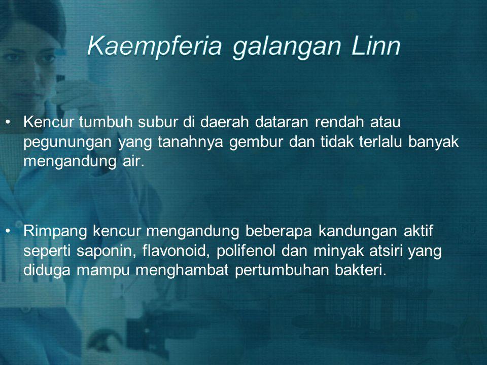 Kaempferia galangan Linn