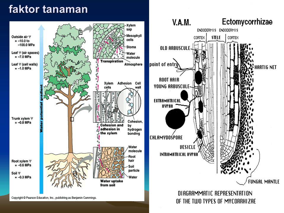 faktor tanaman