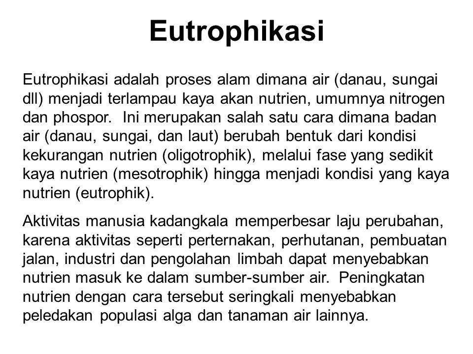 Eutrophikasi