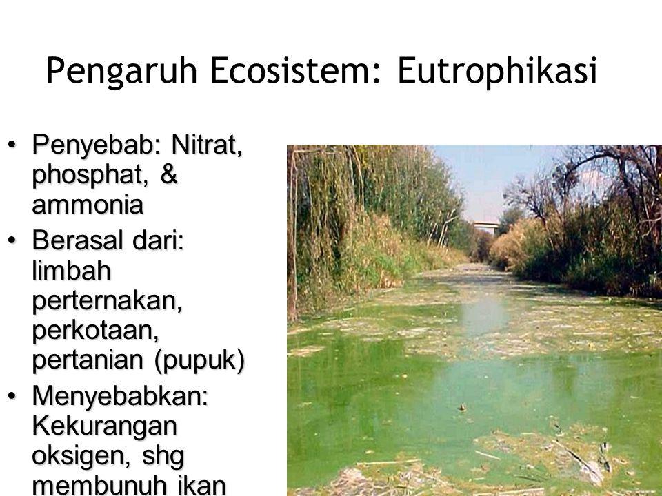 Pengaruh Ecosistem: Eutrophikasi