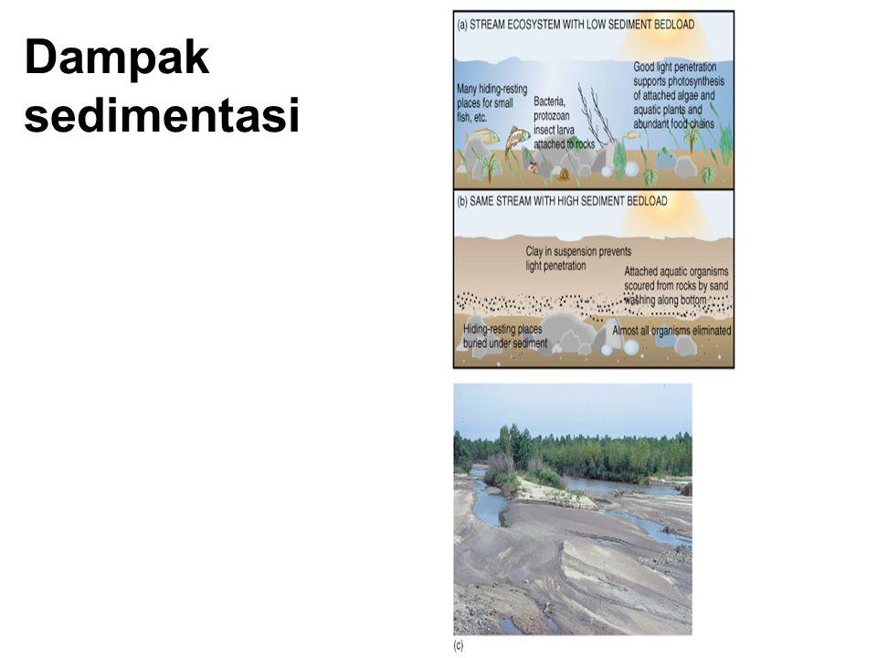 Dampak sedimentasi