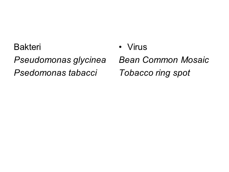 Bakteri Pseudomonas glycinea Psedomonas tabacci