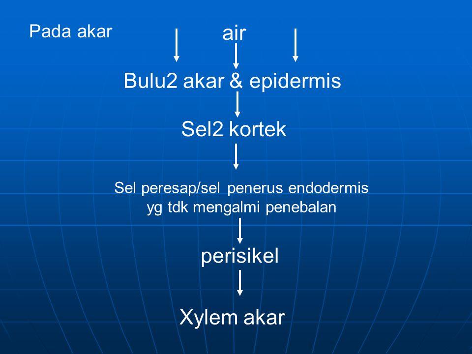 Sel peresap/sel penerus endodermis yg tdk mengalmi penebalan