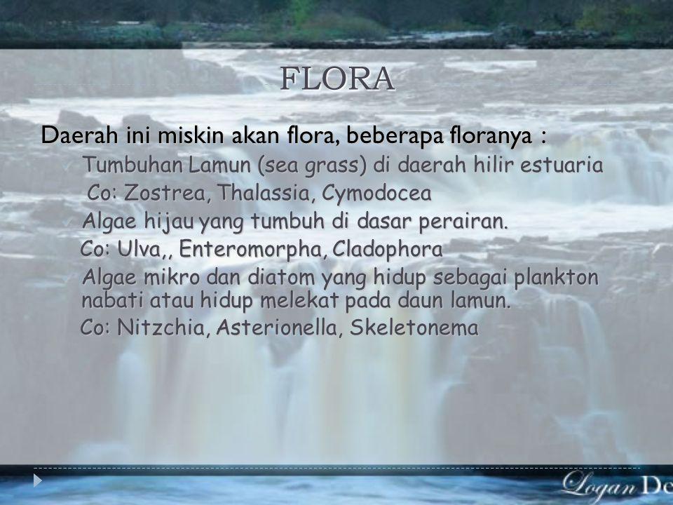 FLORA Daerah ini miskin akan flora, beberapa floranya :