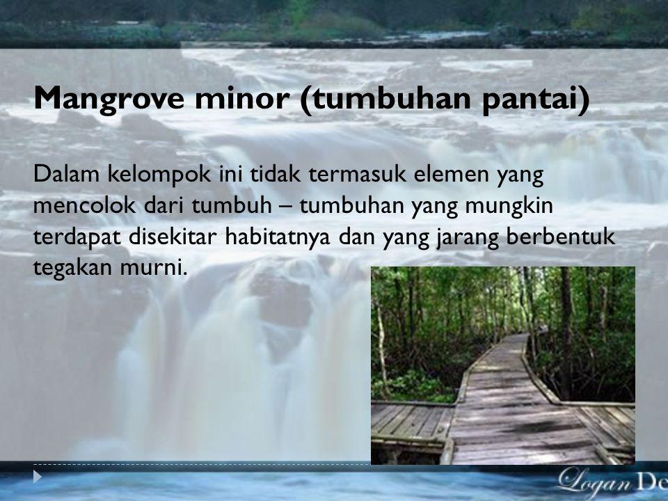 Mangrove minor (tumbuhan pantai)