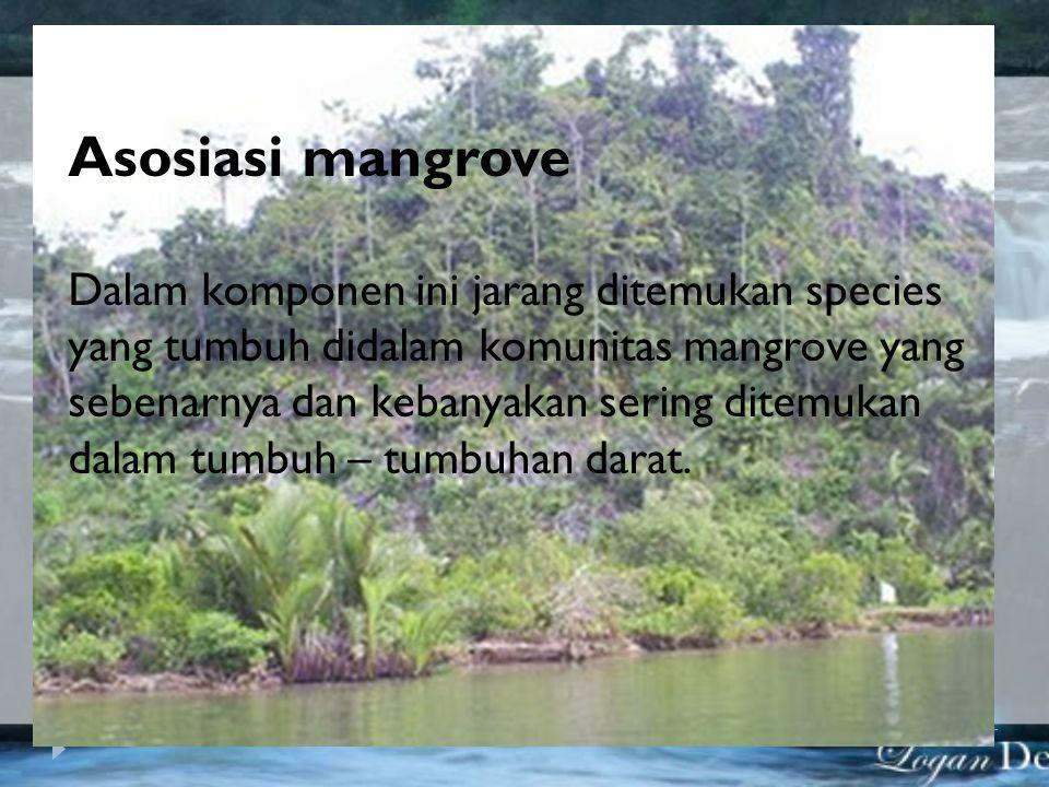 Asosiasi mangrove