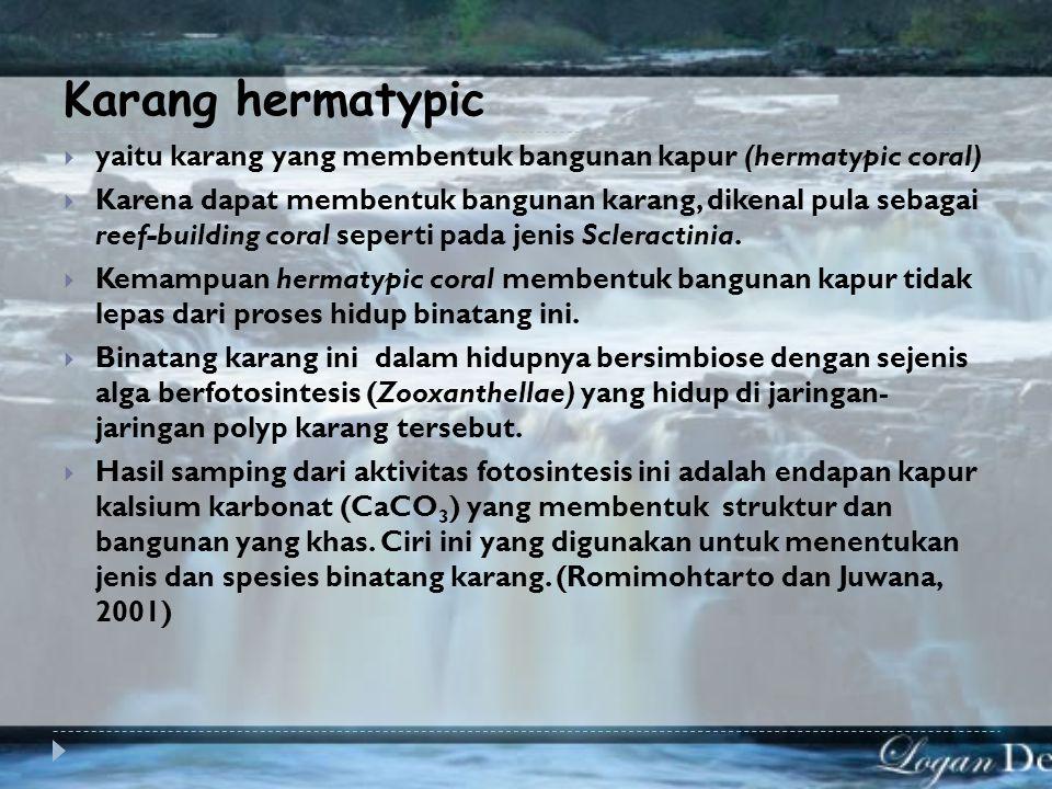Karang hermatypic yaitu karang yang membentuk bangunan kapur (hermatypic coral)