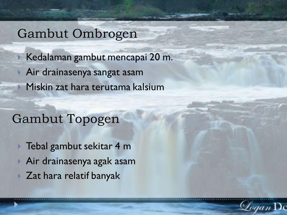 Gambut Ombrogen Gambut Topogen Kedalaman gambut mencapai 20 m.