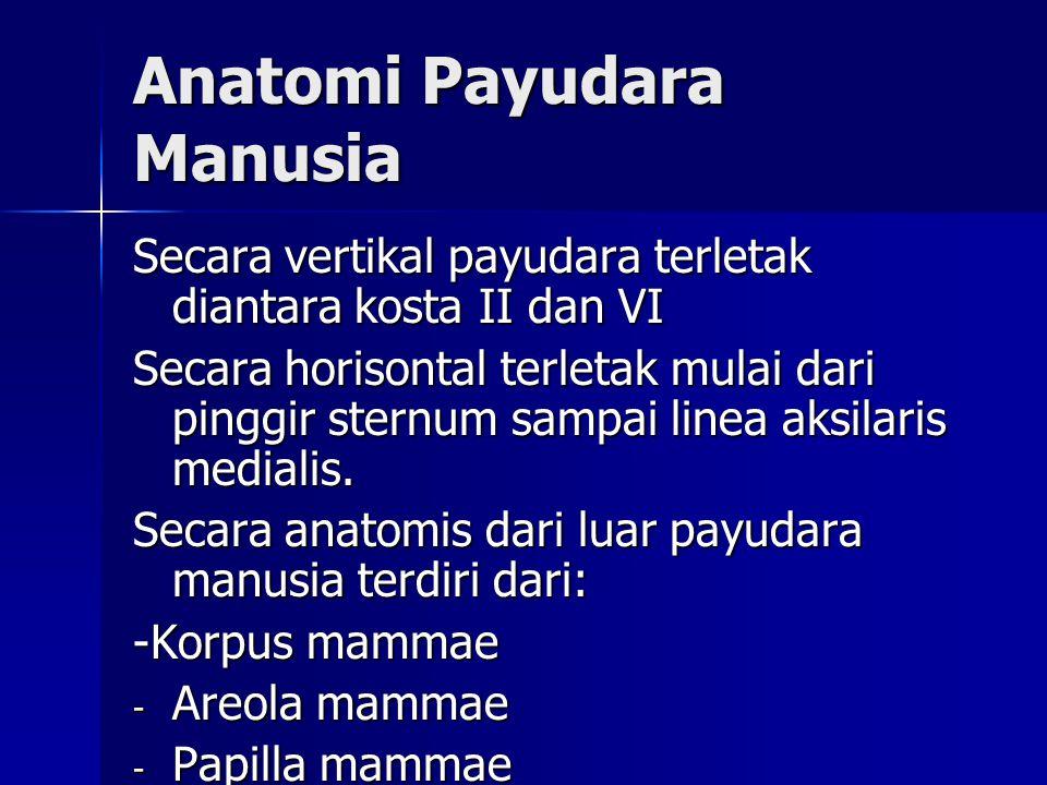 Anatomi Payudara Manusia