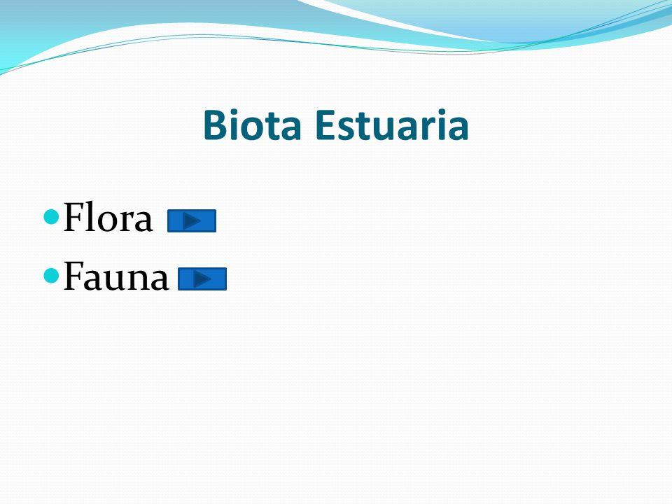 Biota Estuaria Flora Fauna