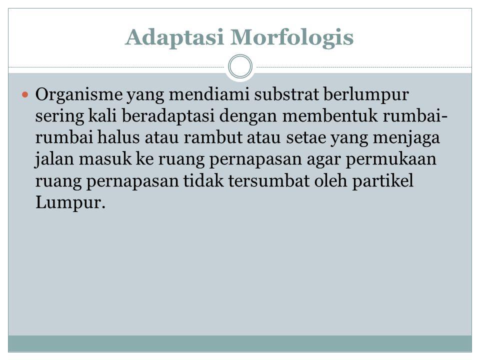 Adaptasi Morfologis