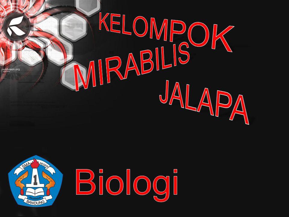 KELOMPOK MIRABILIS JALAPA Biologi