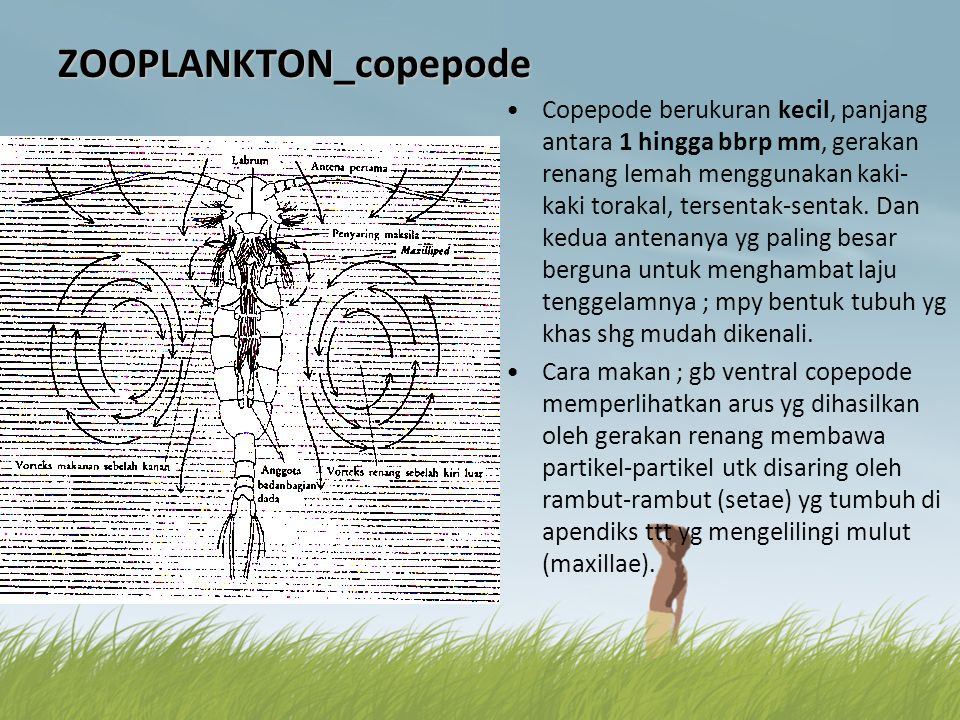 ZOOPLANKTON_copepode