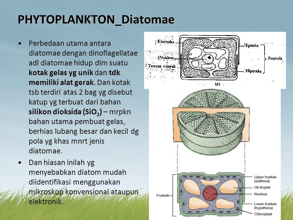 PHYTOPLANKTON_Diatomae