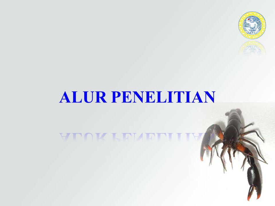 ALUR PENELITIAN