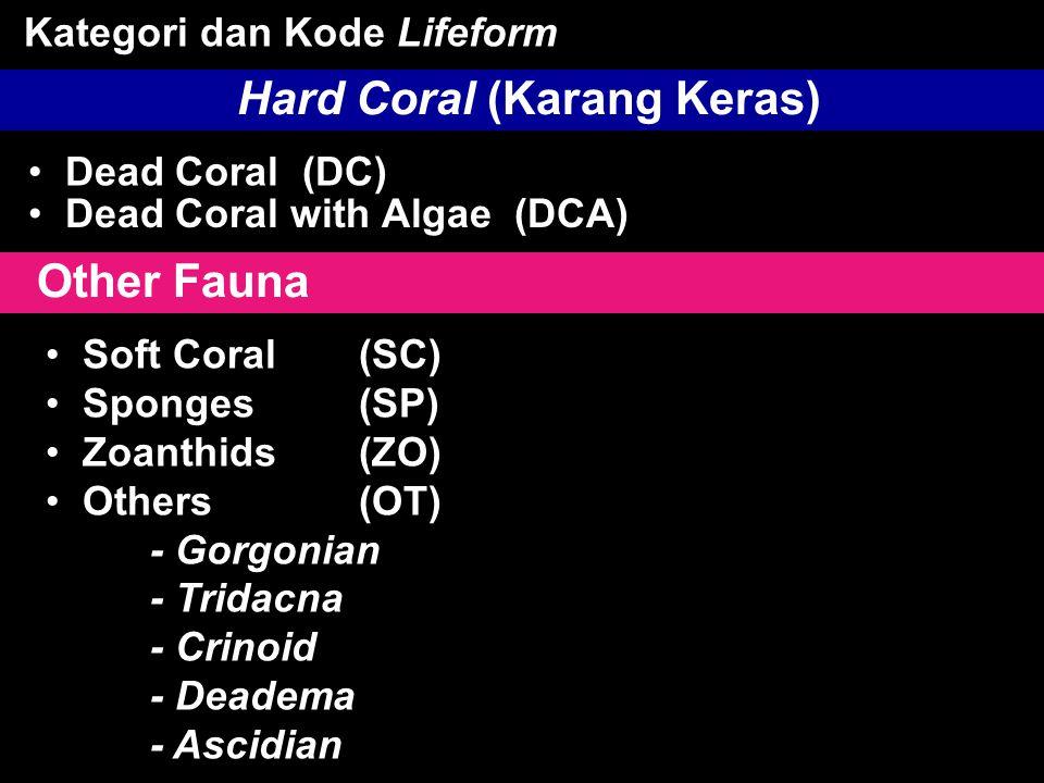 Hard Coral (Karang Keras)