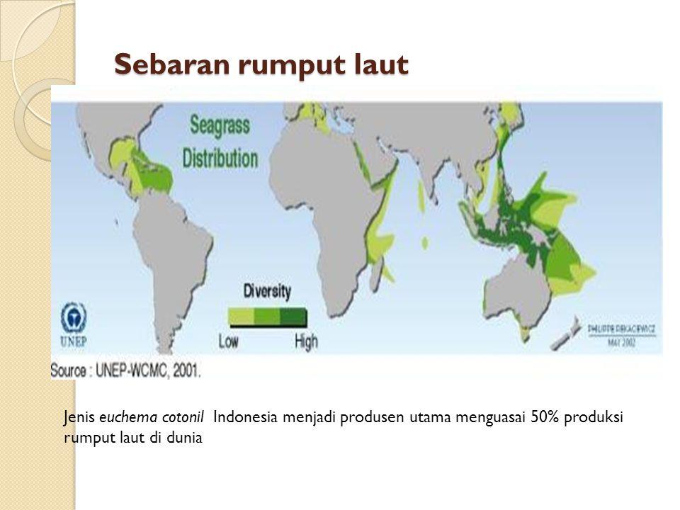 Sebaran rumput laut Jenis euchema cotonil Indonesia menjadi produsen utama menguasai 50% produksi rumput laut di dunia.