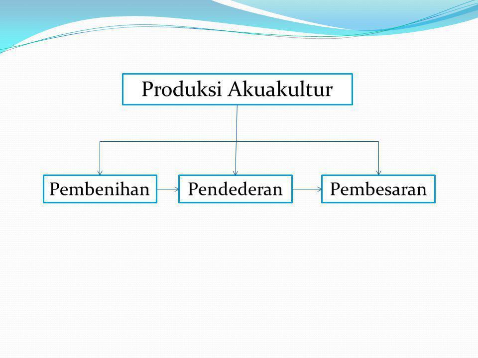 Produksi Akuakultur Pembenihan Pendederan Pembesaran