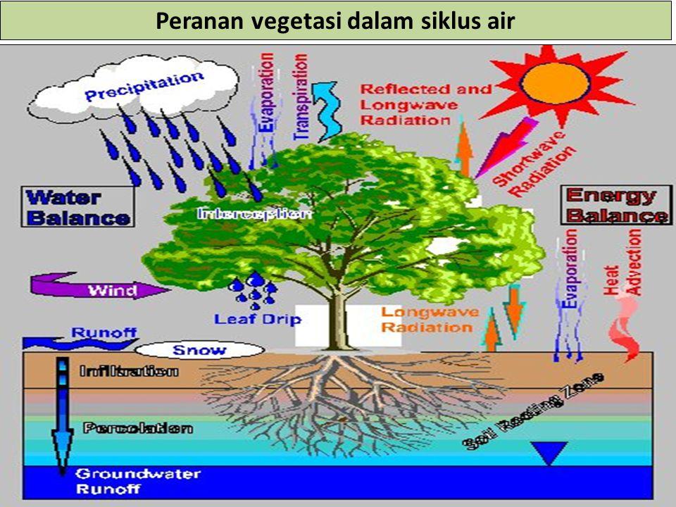 Peranan vegetasi dalam siklus air