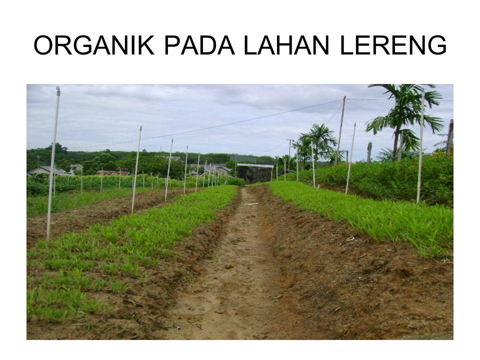 ORGANIK PADA LAHAN LERENG
