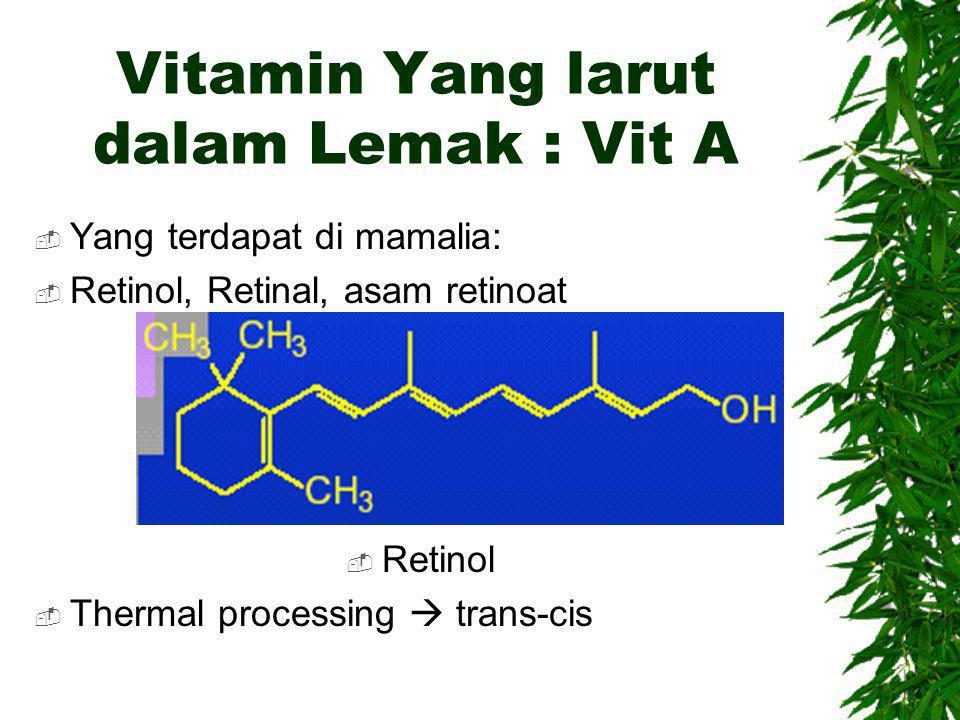 Vitamin Yang larut dalam Lemak : Vit A