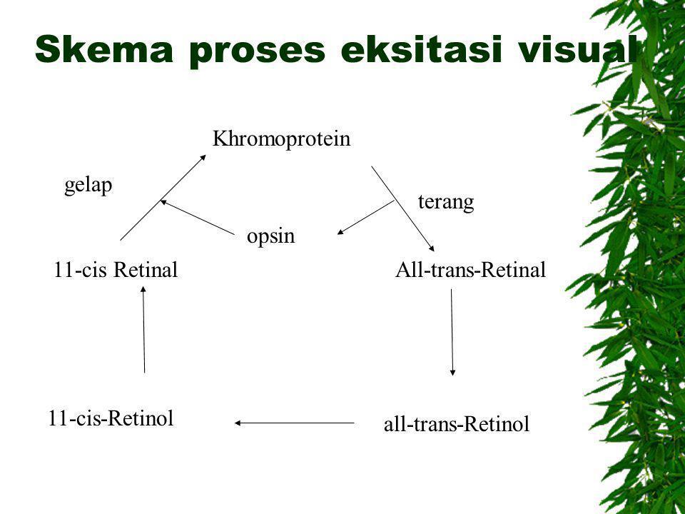 Skema proses eksitasi visual