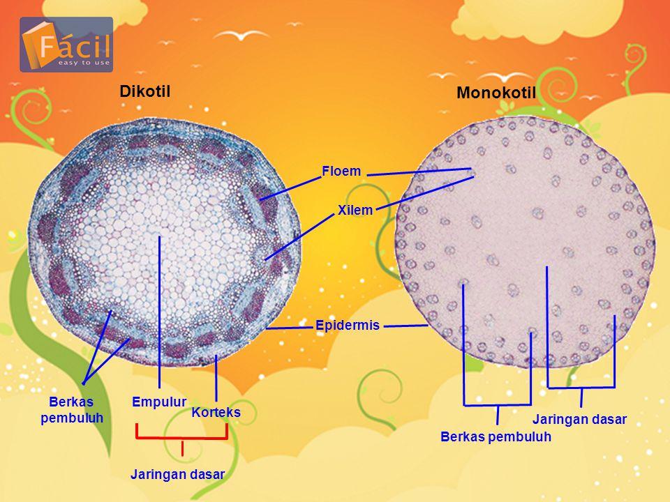 Dikotil Monokotil Floem Xilem Epidermis Berkas pembuluh Empulur