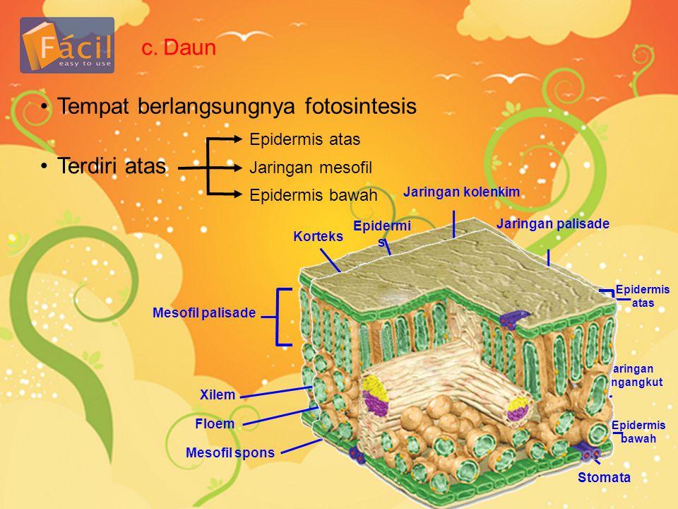 Tempat berlangsungnya fotosintesis