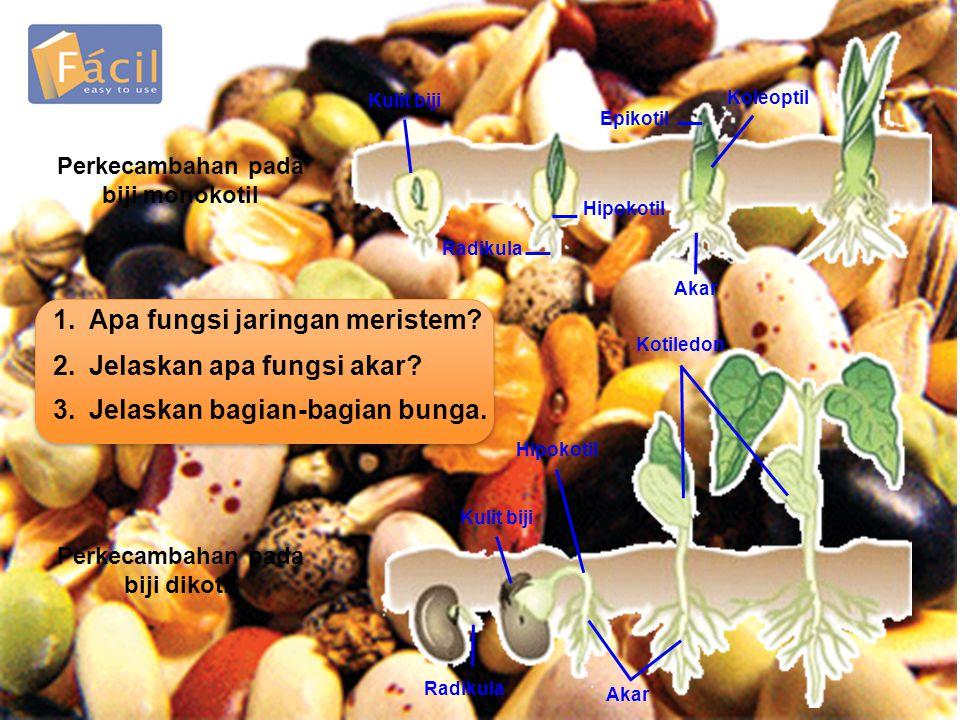 Perkecambahan pada biji monokotil Perkecambahan pada biji dikotil
