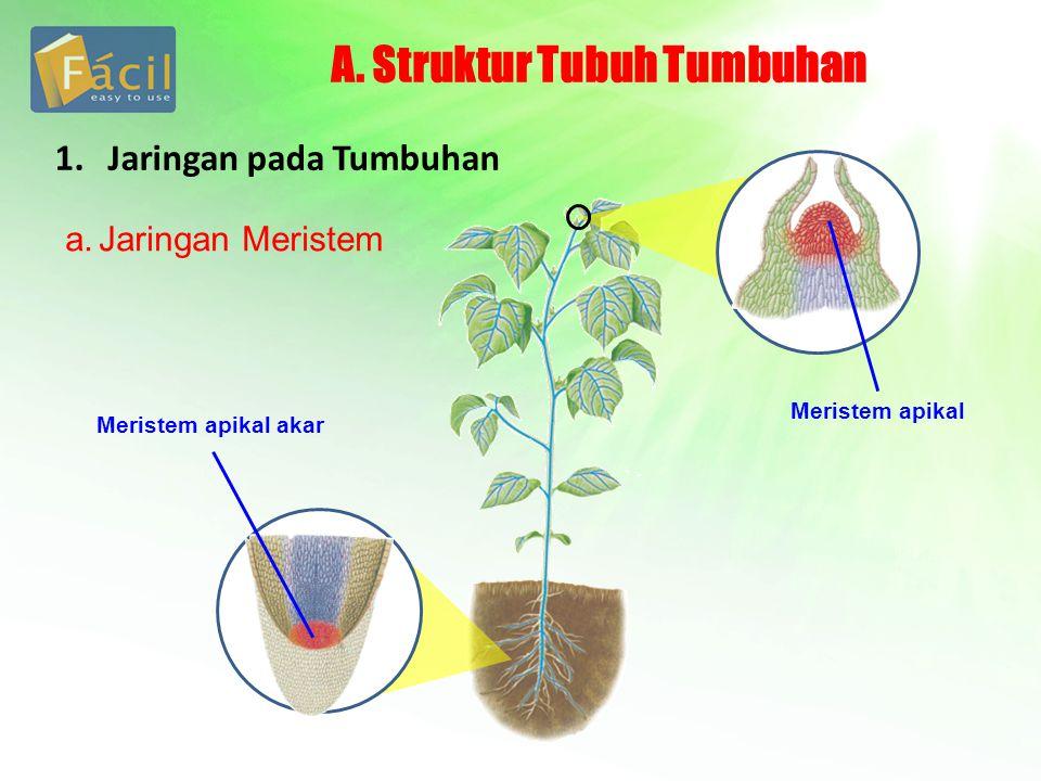 A. Struktur Tubuh Tumbuhan