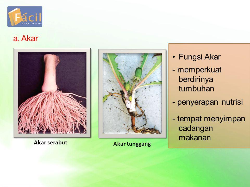 a. Akar Fungsi Akar - memperkuat berdirinya tumbuhan