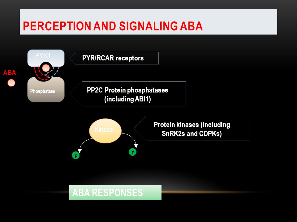 Perception and Signaling ABA
