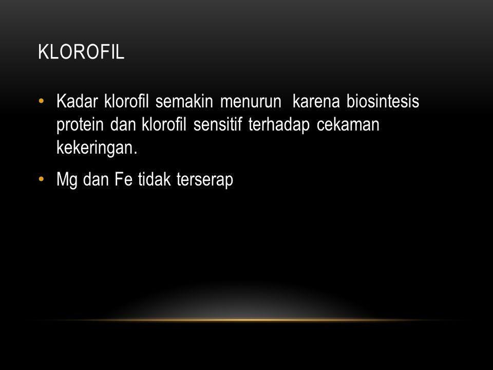 KLOROFIL Kadar klorofil semakin menurun karena biosintesis protein dan klorofil sensitif terhadap cekaman kekeringan.
