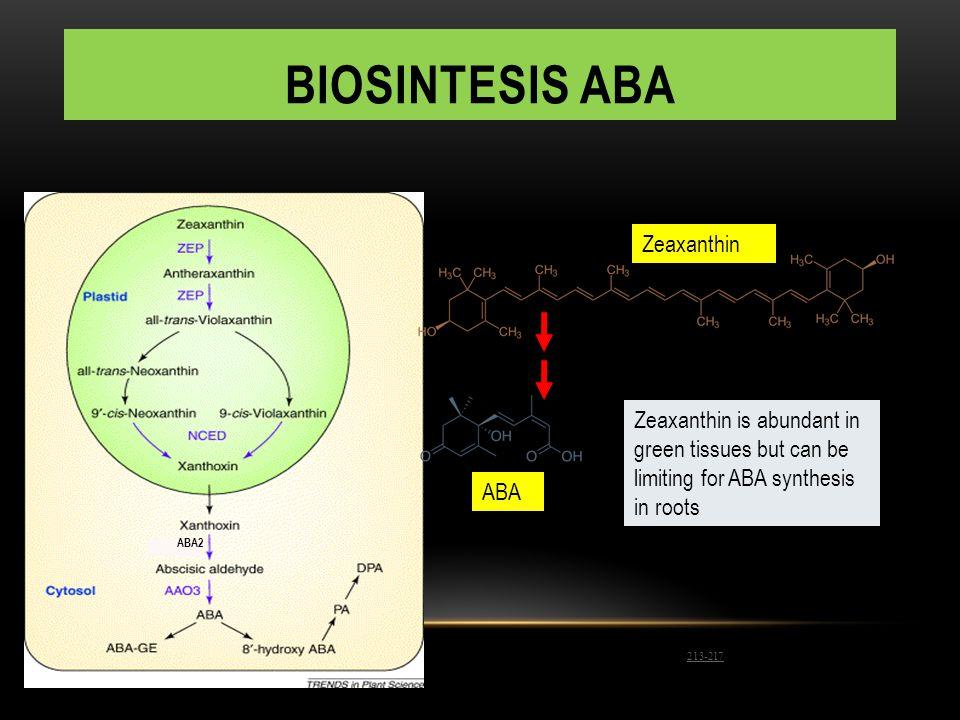 BIOSINTESIS ABA Zeaxanthin